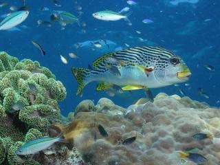 Reef Tour - Marine Life