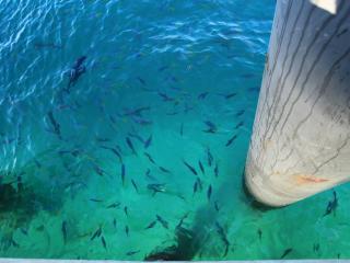 Green Island Cruises - Fish Feeding