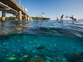 Green Island Cruises - Green Island - Marine Life