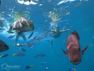 Quicksilver Wavepiecer - Marine Life