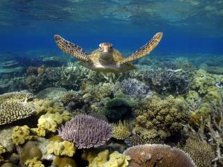 Moore Reef Turtle & Reef